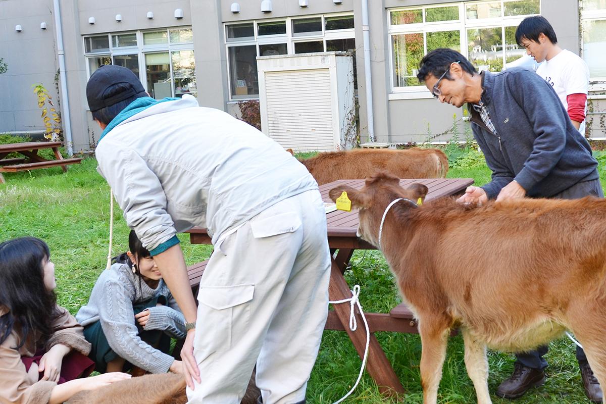 弘大 農学生命科学部が「酪農体験」を開催