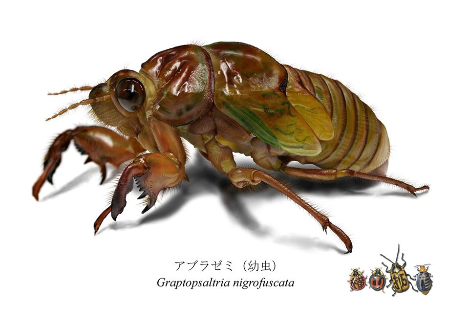 昆虫のイラスト