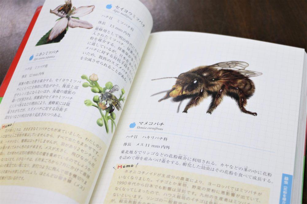 マメコバチのページ