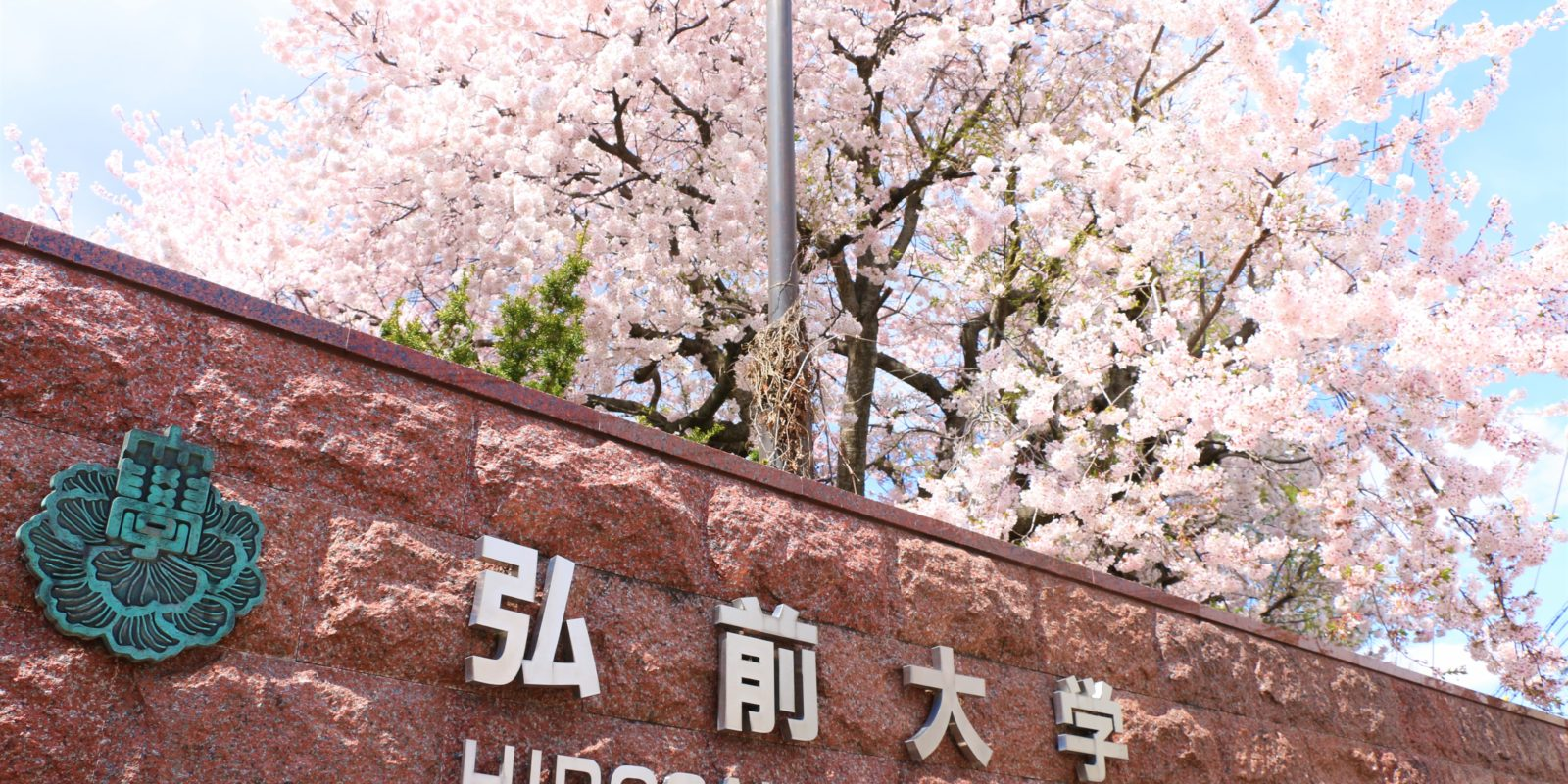 弘前大学桜