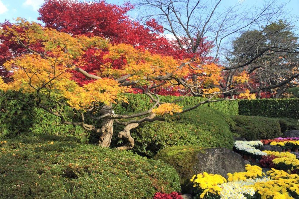 秋の弘前公園