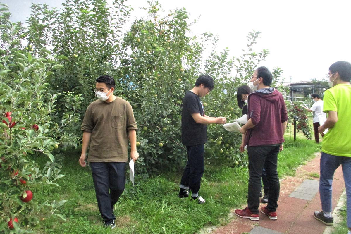 学生たちと弘前大学内のりんご見本園で実習を行っている様子。