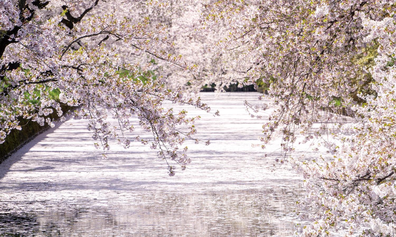 弘前公園の外濠
